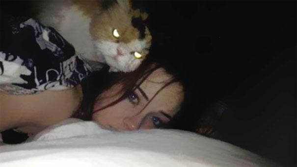 gatos-malvados-planean-asesinato (8)