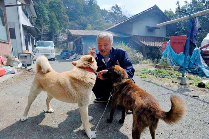 Este hombre volvió a Fukushima para alimentar a los animales que quedaron allí abandonados