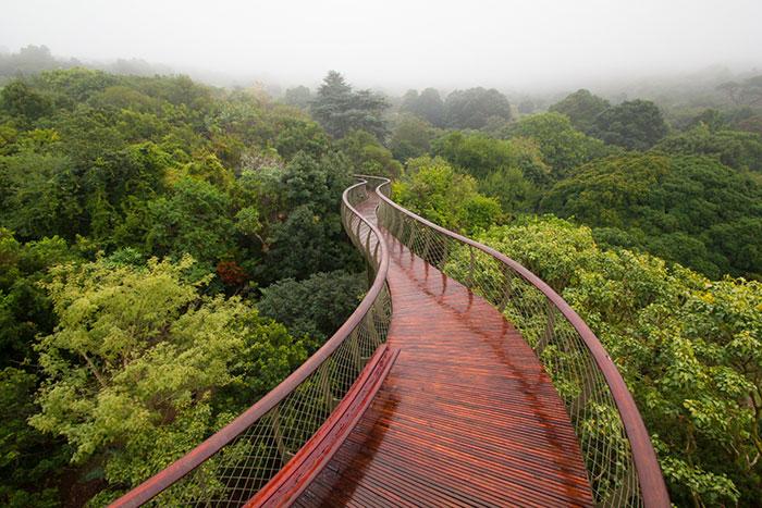 Esta pasarela en Ciudad del Cabo permite a los amantes de la naturaleza pasear sobre las copas de los árboles