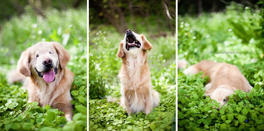 perro-ciego-terapia-smiley-stacey-morrison (2)