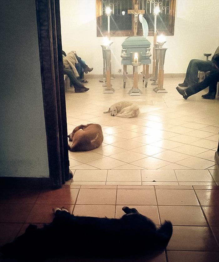 Unos perros callejeros asisten al funeral de la mujer que se pasó la vida alimentándolos