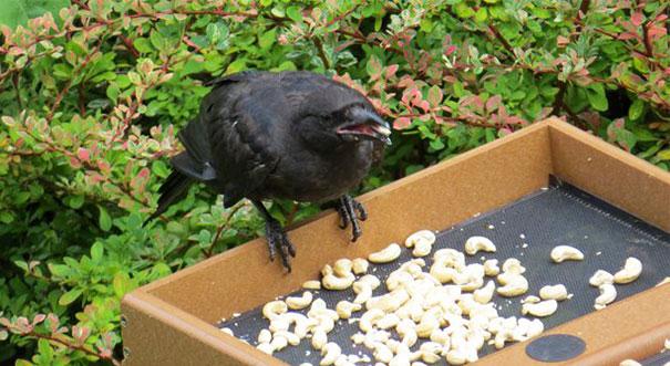 regalos-por-alimento-cuervos-gabi-mann (3)