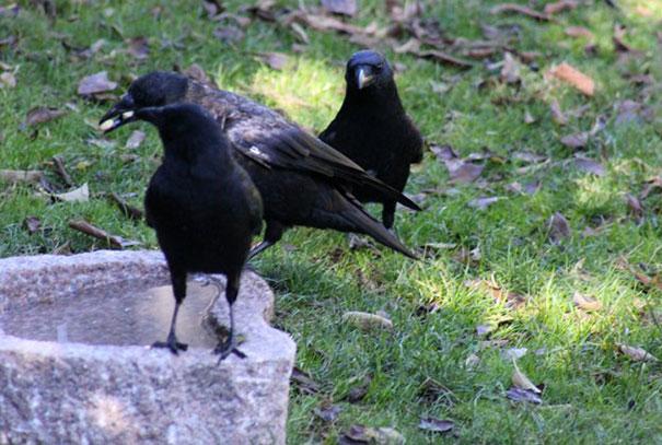 regalos-por-alimento-cuervos-gabi-mann (4)