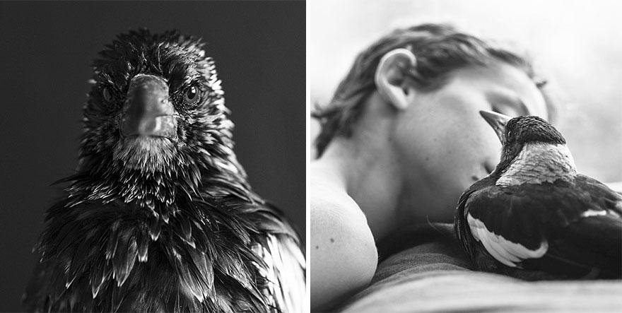 urraca-penguin-rescatada-amistad-familia-australia (17)