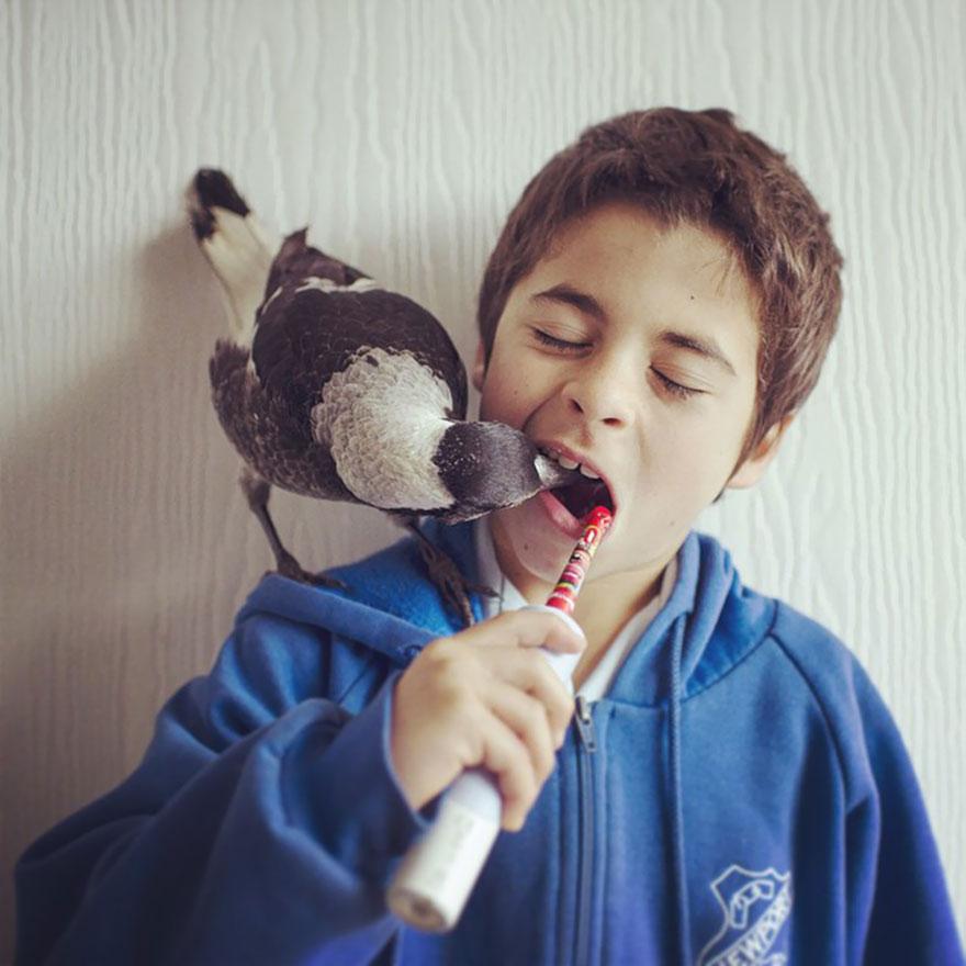 urraca-penguin-rescatada-amistad-familia-australia (9)