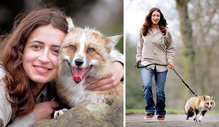 Este zorro rescatado y criado por humanos se cree que es un perro