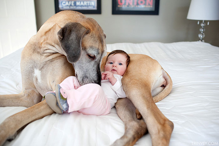 amistad-ninos-perros (19)