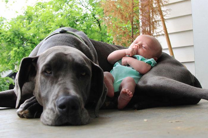 amistad-ninos-perros (20)