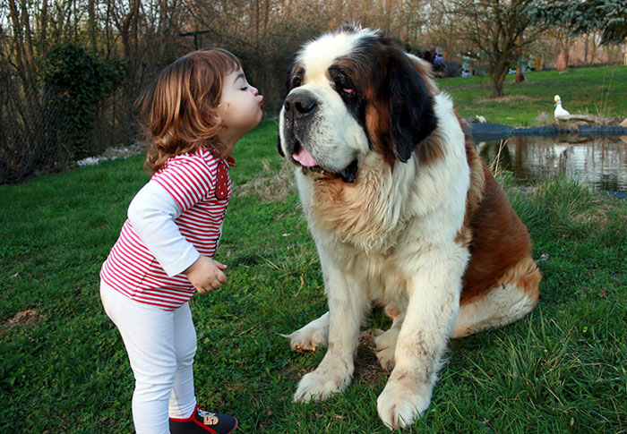 amistad-ninos-perros-23 (3)