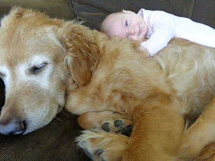 amistad-ninos-perros-231