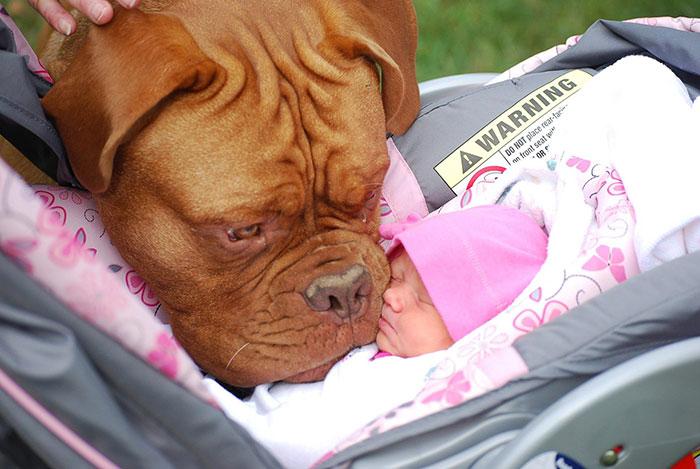 amistad-ninos-perros (7)