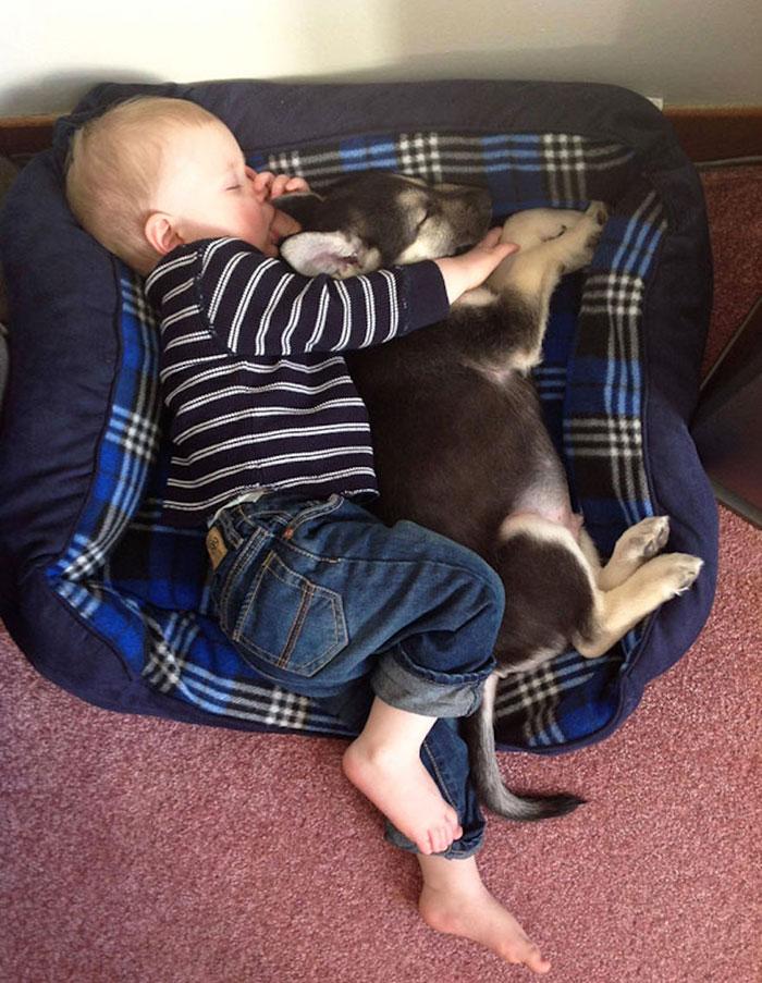 amistad-ninos-perros (8)