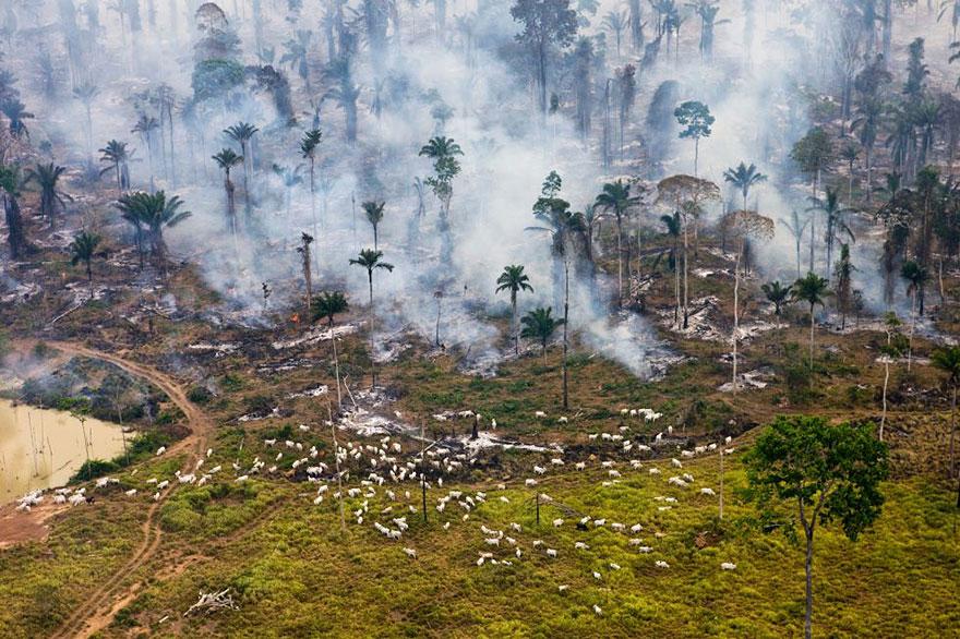 contaminacion-planeta-sobredesarrollo-sobrepoblacion-exceso (9)