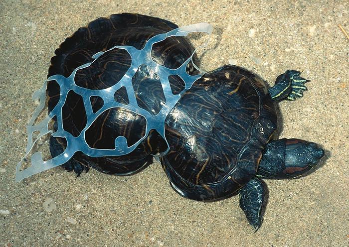 22 Fotos desgarradoras de la contaminación de nuestro planeta para animarte a reciclar