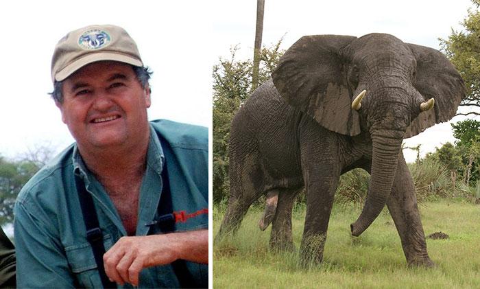 Un cazador de marfil fue pisoteado hasta la muerte por el elefante que intentaba cazar