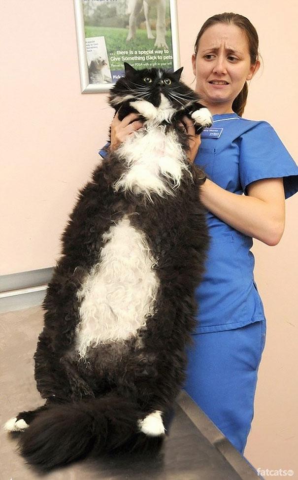 gatos-enormes (1)