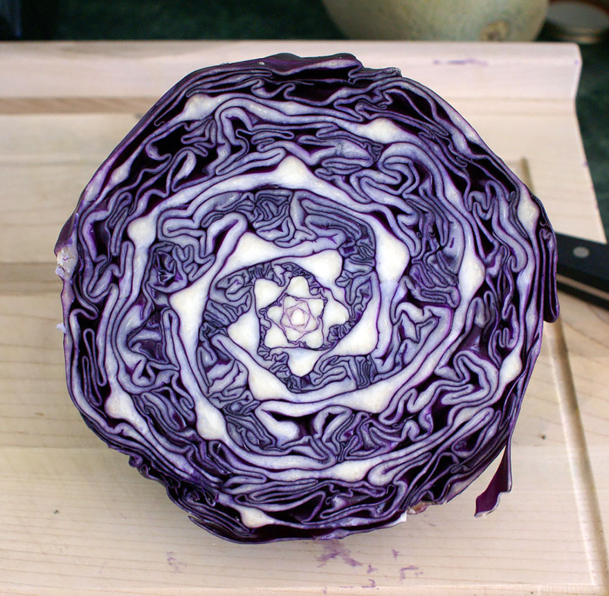plantas-geometricas (1)