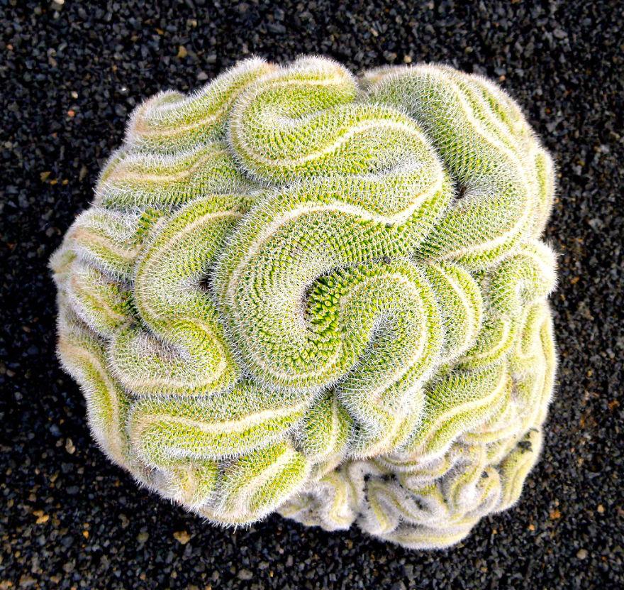 plantas-geometricas (27)