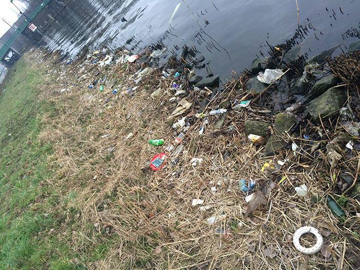 proyecto-recoger-basura-diariamente-pigswegetwhatpigsdeserve-holanda (2)