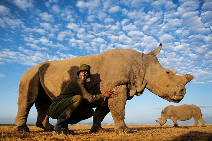 Los guardabosques protegen al último rinoceronte blanco del norte que queda en el mundo