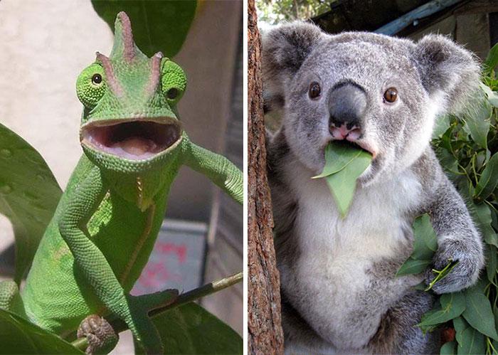 20 Animales asombrados que están alucinando con lo que pasa