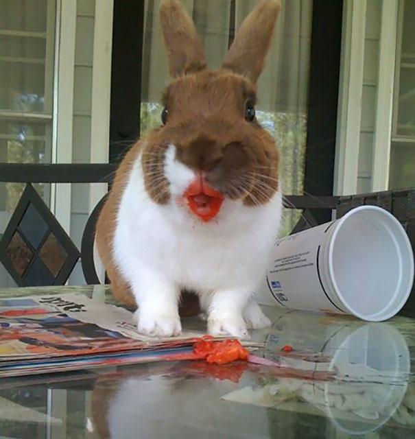 animales-comiendo-bayas (7)