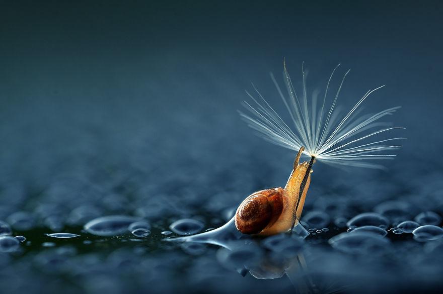 animales-paraguas-naturales (1)