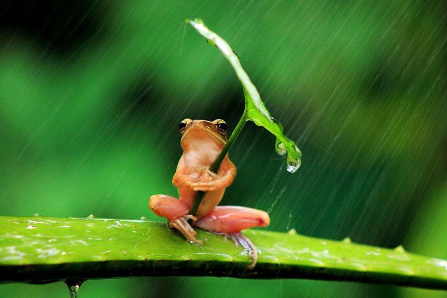 animales-paraguas-naturales (12)