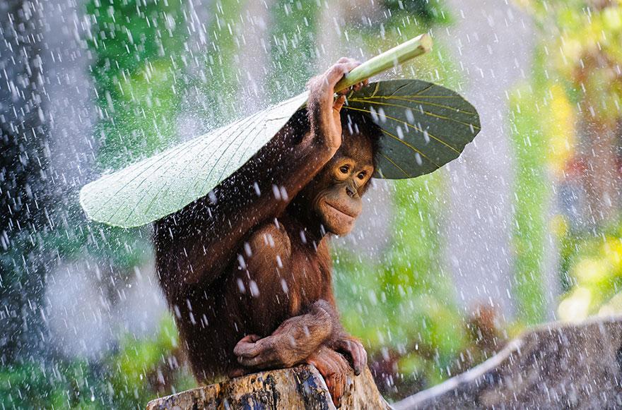 animales-paraguas-naturales (2)