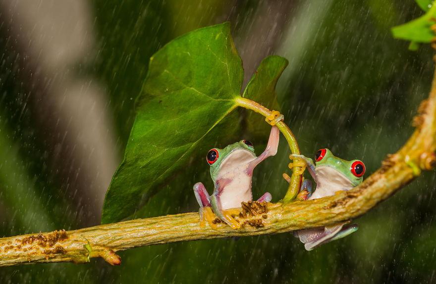 animales-paraguas-naturales (9)