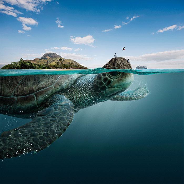 Estos majestuosos animales marinos cargan sobre sus espaldas las 4 biosferas de Ecuador