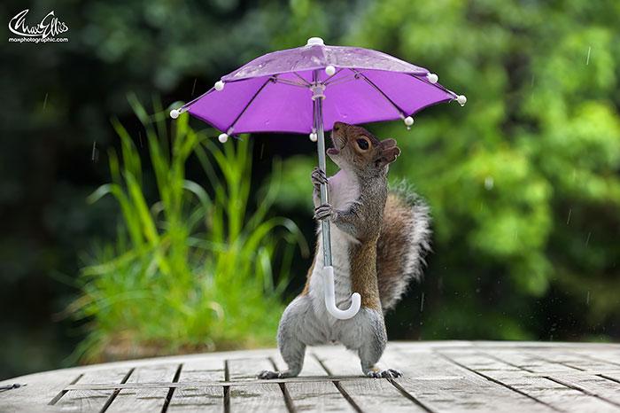 Este fotógrafo le dio un paraguas diminuto a una ardilla para que se protegiera de la lluvia
