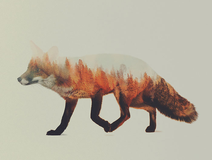 Retratos de animales en doble exposición creados por un fotógrafo noruego