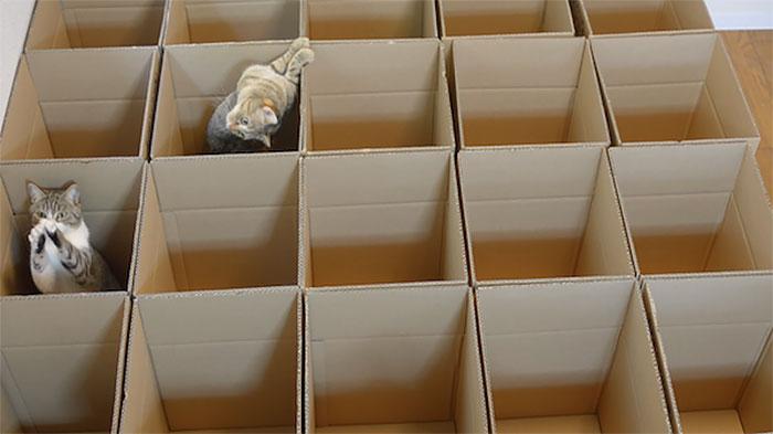 gatos-jugando-laberinto-cajas-carton (3)