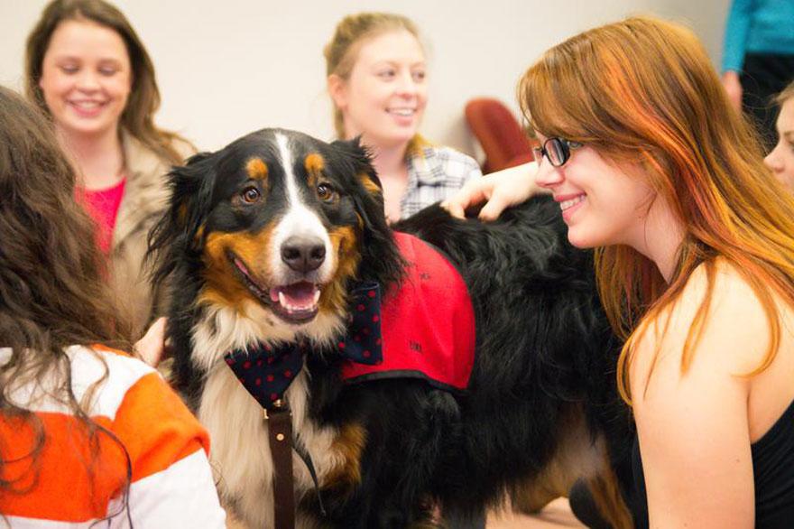 habitacion-cachorros-estudiantes-estresados-universidad-lancashire (4)