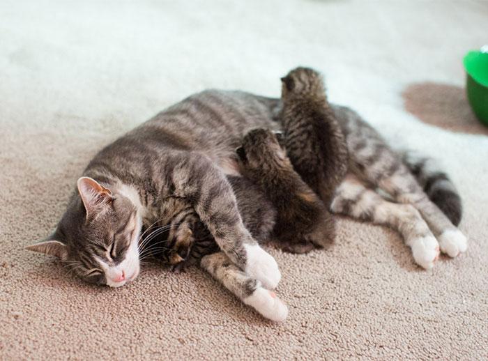 3 Gatitos abandonados encuentran una nueva madre adoptiva en una gata que perdió a sus crías