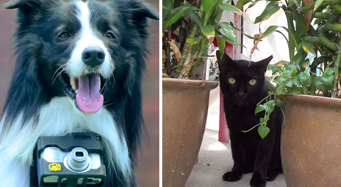 El primer perro fotógrafo del mundo usa un monitor cardiaco que saca fotos cuando se emociona