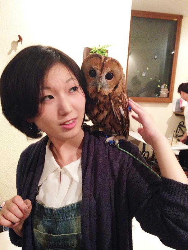 cafeteria-buhos-ikefukuroucafe-tokyo (10)