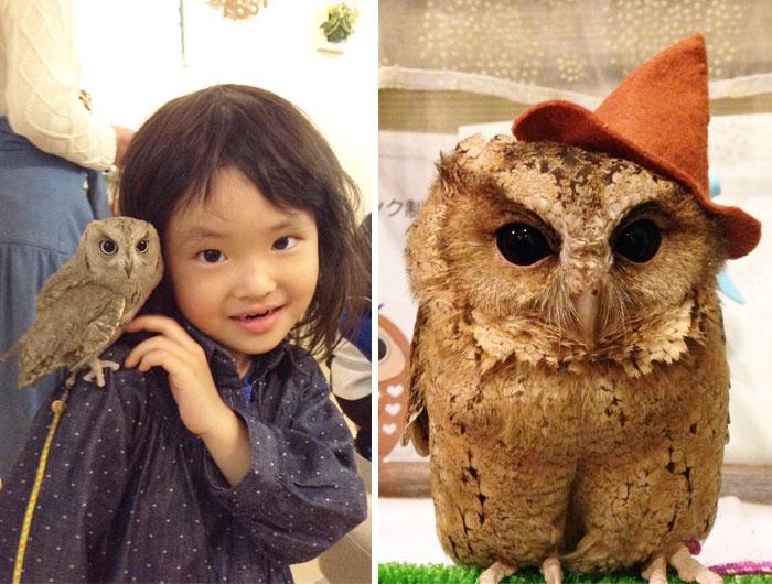 Echa una ojeada al interior de una de las cafeterías de búhos de Tokyo