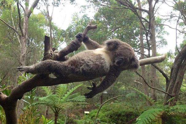 fotos-divertidas-animales-posando (44)