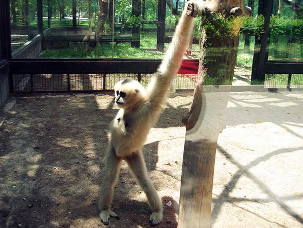 fotos-divertidas-animales-posando (5)