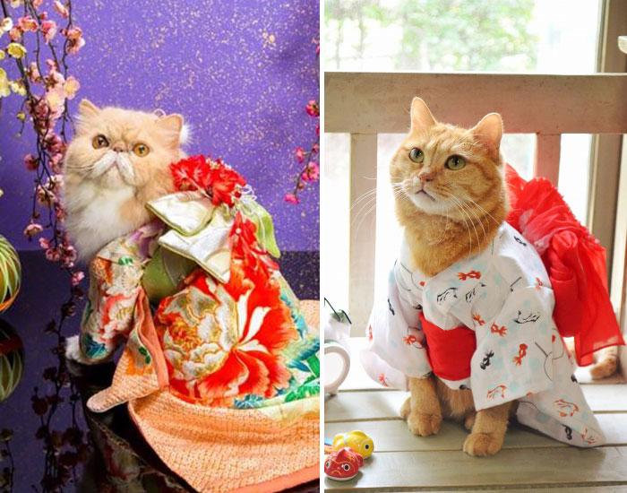 Los gatos con kimono son la moda más popular en Japón