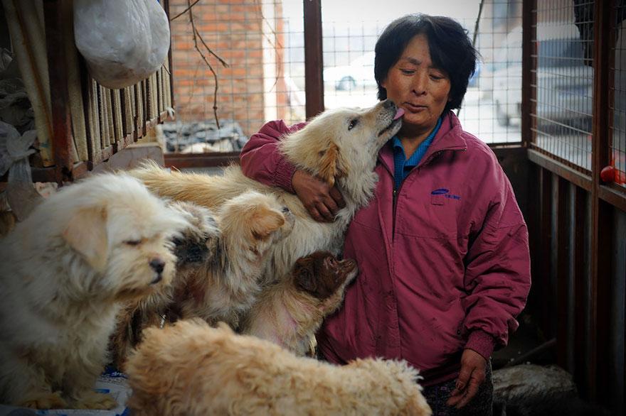 perros-rescatados-festival-yulin-china (9)