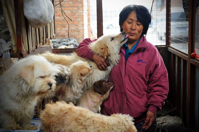 Esta mujer china viajó 2400 kms y pagó casi 1000 € para salvar a 100 perros de un festival donde iban a comerlos