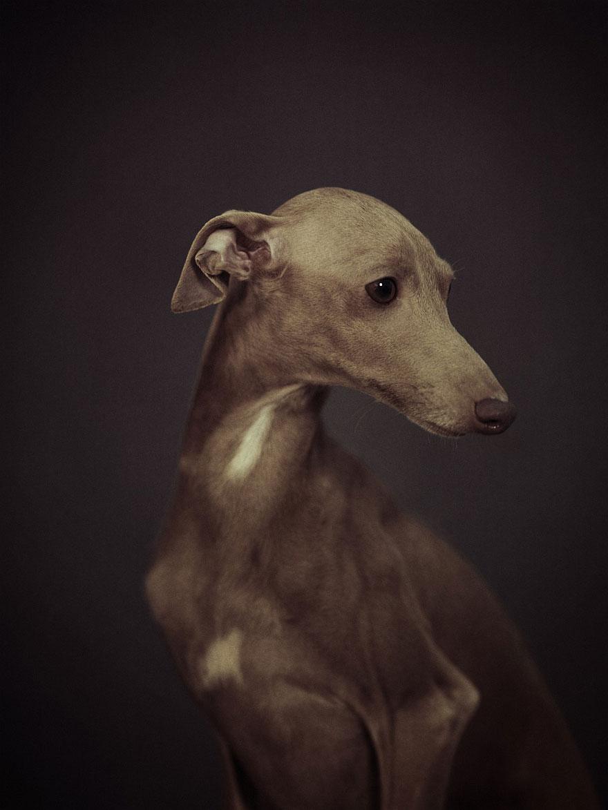 retratos-animales-emociones-humanas-vincent-lagrange (1)