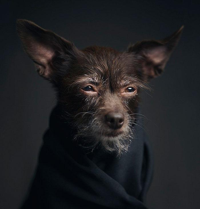 """Estos expresivos retratos de animales muestran sus emociones """"humanas"""""""
