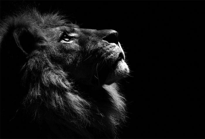 Estos retratos de animales en blanco y negro fueron hechos en un zoo