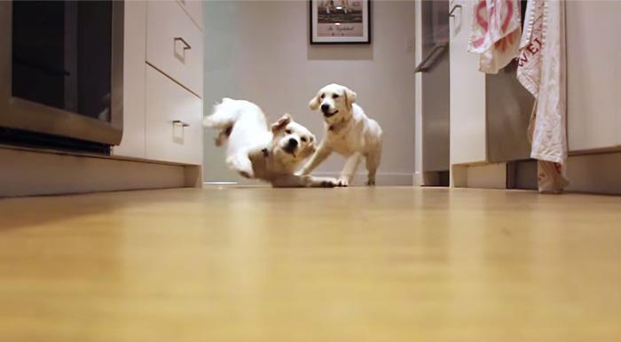 Estos cachorros corren a por su cena en un vídeo secuencial de 9 meses