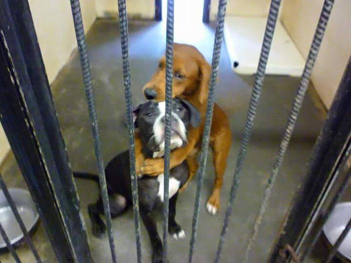 El abrazo de estos 2 perros poco antes de ser sacrificados salvó sus vidas