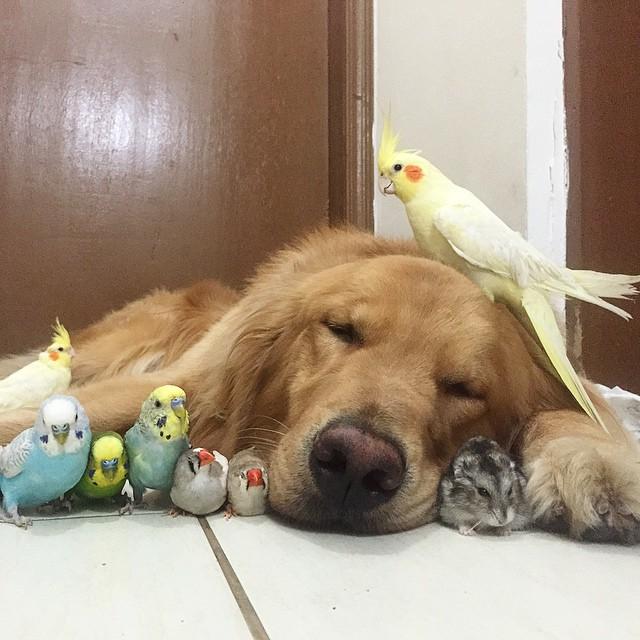 Un perro, 8 pájaros y un hamster son los mejores y más inusuales amigos
